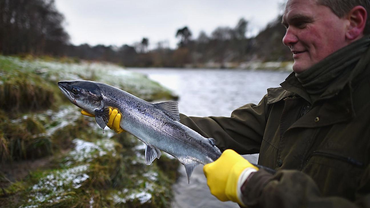 Какой тип лосося полезнее