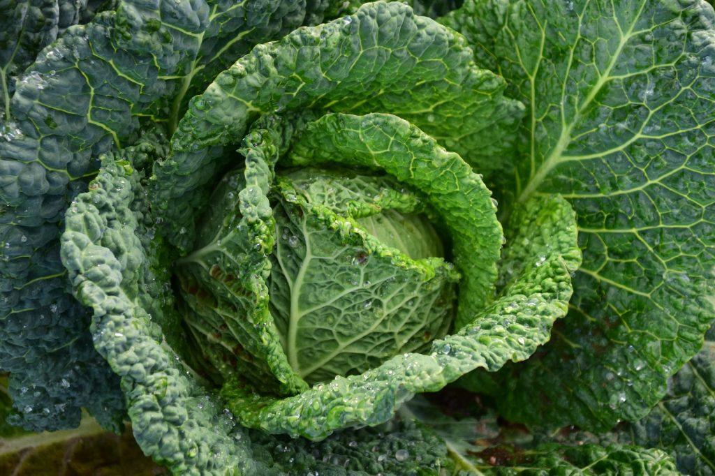 польза овощей при похудении